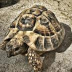 Quanti nomi può avere la Tartaruga in Sardegna?